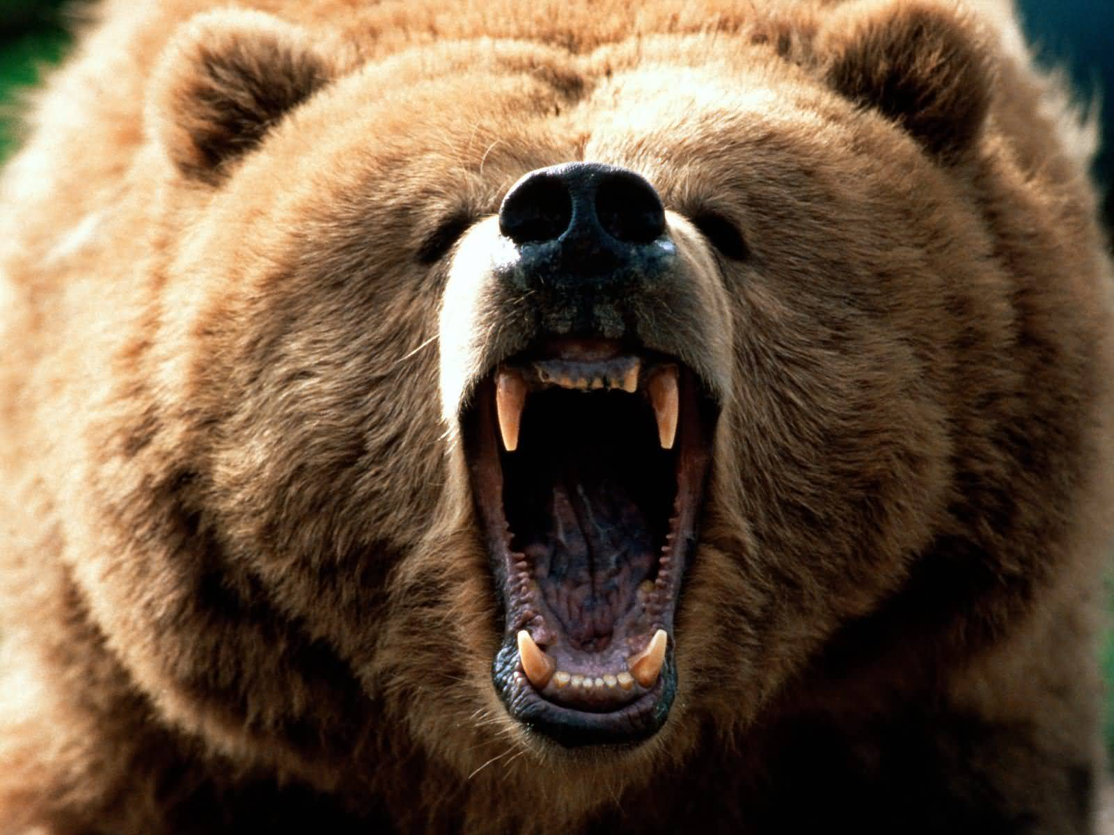 Defkalion Green Technologies Cold Fusion Now Ecat Can Operate Off Of Power Grid Rossi Grizzly Bear